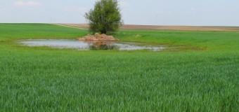 Współczesne rolnictwo – jak się zmieniło?