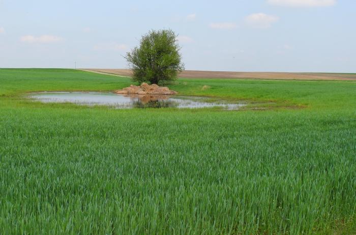 Dotacje na rolnictwo